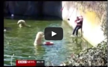 Woman attacked by Polar Bears at Berlin Zoo