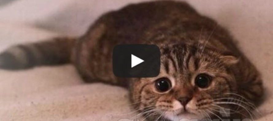 Video: Cute cats feel guilty