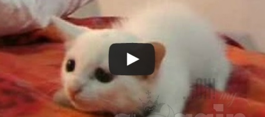 Most Hilarious Videos Of Cats 2014