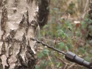 READ, why the birch water is good for your health, what does it contain and how could it help you